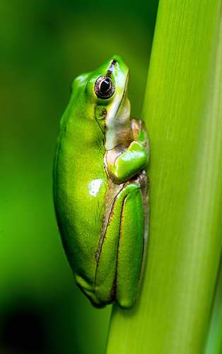 frog macro photo of green frog invertebrate