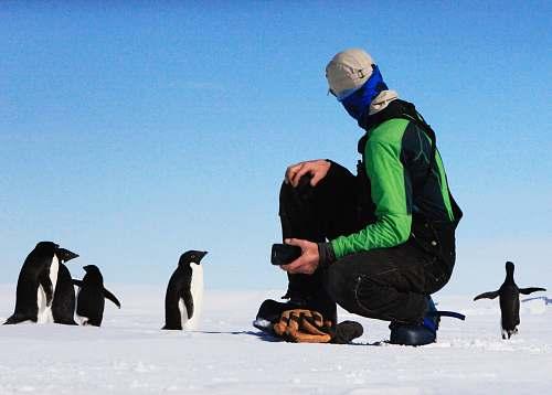 bird man near penguins penguin