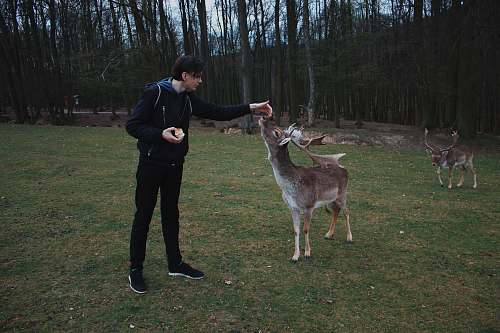 mammal man standing beside deer antelope