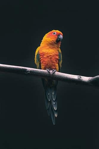 bird orange parrot parrot