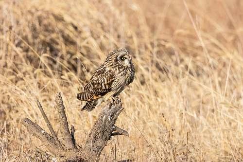 bird owl perching on tree branch owl