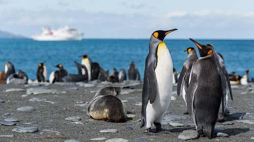 bird penguins in seashore penguin