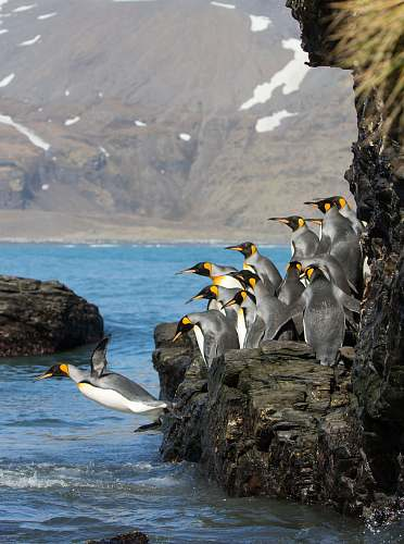 bird penguins standing on rock formation booby