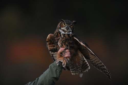 bird person holding brown owl owl