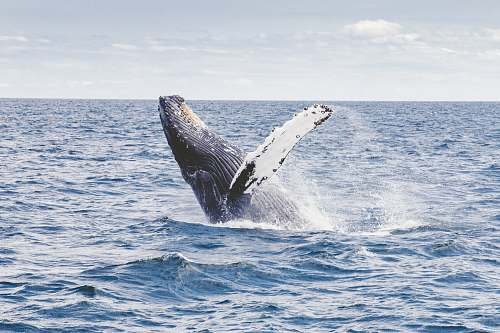 nature photography of whale whale