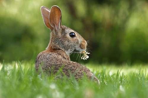 rabbit selective focus photo of brown rabbit on grasses bunny