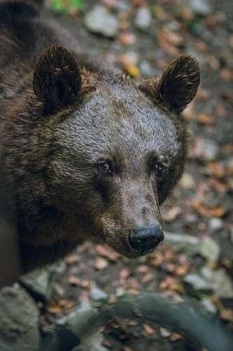 bear selective focus photography of a black bear wildlife