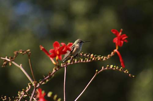 bird selective focus photography of bird perching on red flowers hummingbird