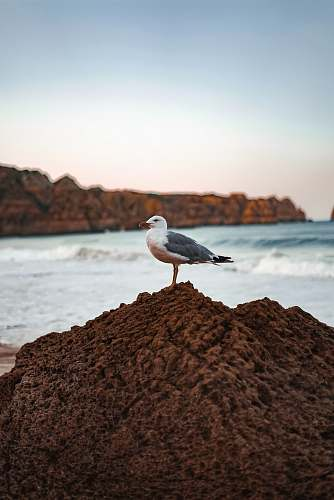 seagull selective focus photography of gull perching on rock nature