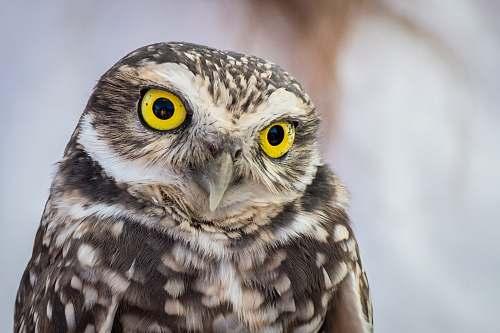 bird selective focus photography of owl with yellow eyes owl