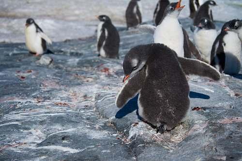 bird selective focus photography of penguins penguin
