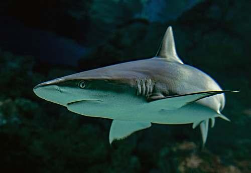 shark selective focus photography of shark fish