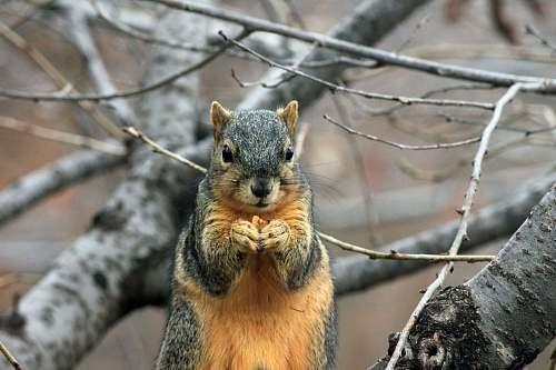 squirrel selective focus photography of squirrel mammal
