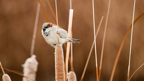 photo bird selective focus photography of white and brown short-beaked bird perched on brown plant sparrow free for commercial use images