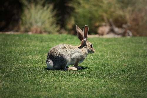 mammal shallow focus photo of brown rabbit kangaroo