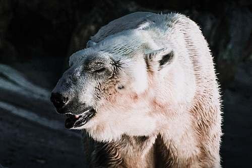 wildlife shallow focus photography of white bear bear