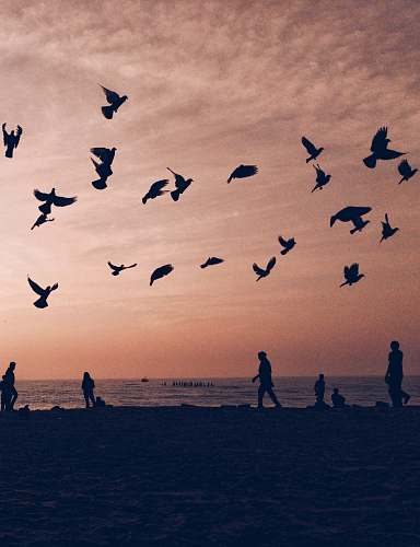 flock silhouette of flock of birds flying on seashore with people walking and standing during sunset human