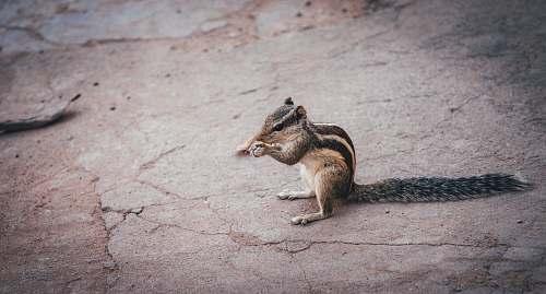 mammal squirrel wallaby
