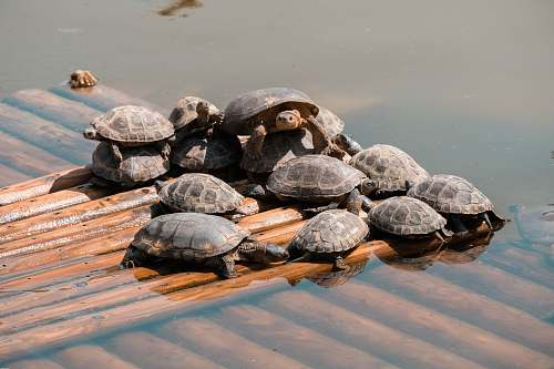reptile turtle lot in a wooden surface with water during daytime sea life