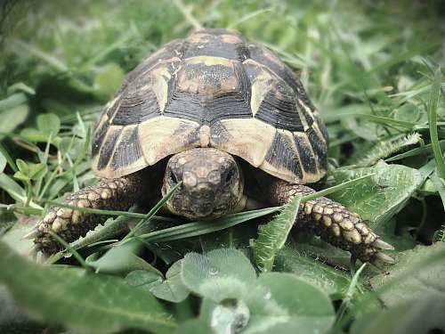 reptile turtle on plants turtle