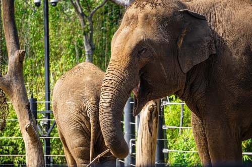 mammal two gray elephants at daytime elephant