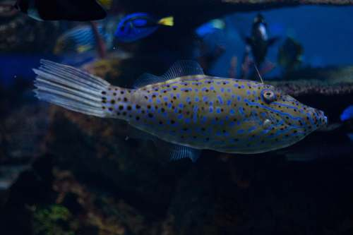 photo aquatic underwater photo of gray and blue spotted fish water free for commercial use images