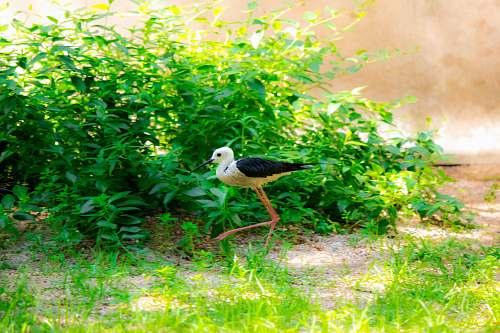 bird white and black bird beak