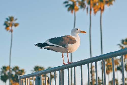 bird white and black ducks flying railing