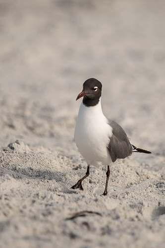 bird white and brown bird finch