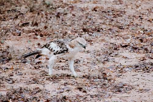 bird white and brown owl ground
