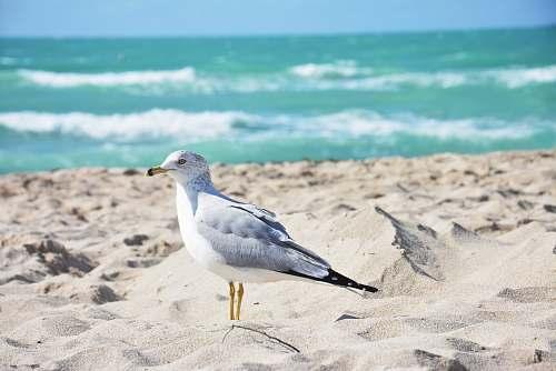bird white and grey bird on sand during daytime nature