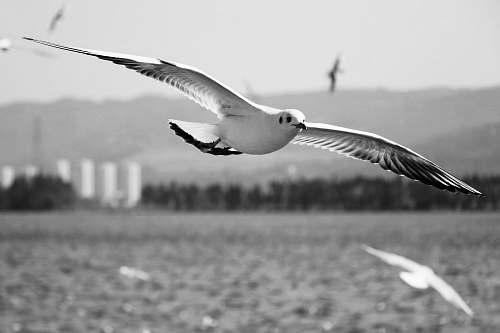 black-and-white white bird beak