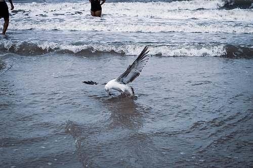 bird white bird on body of water water