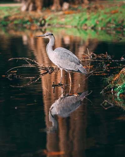 bird white bird on body of water near land outdoors