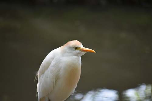 photo bird white coated bird ardeidae free for commercial use images