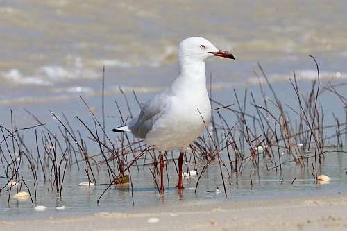 bird white dove standing in body of water nature