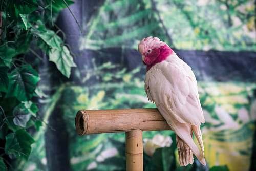 bird white parrot zoo