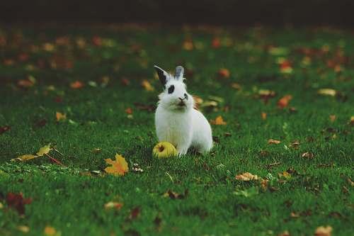 rabbit white rabbit standing on grass bunny