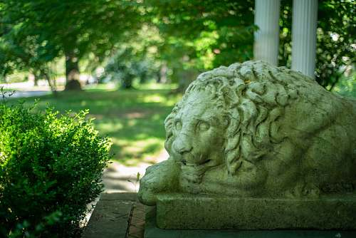 mammal white statue of a lion wildlife