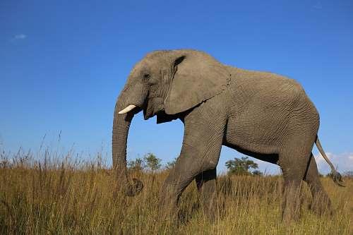 wildlife wildlife photography of gray elephant elephant