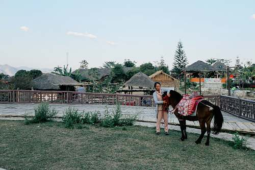 horse woman holding black horse beside fence person