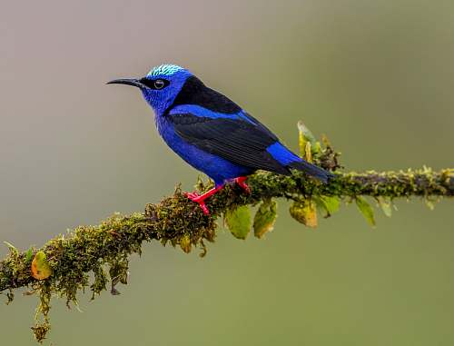 photo animal blue hummingbird on tree branch bluebird free for commercial use images