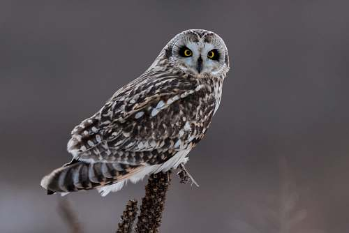 animal photo of brown and white owl owl