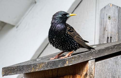animal selective focus photography of black bird beak