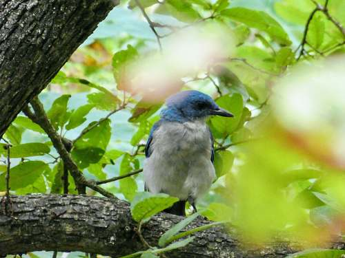 photo animal selective focus photography of perching blue and white bird jay free for commercial use images