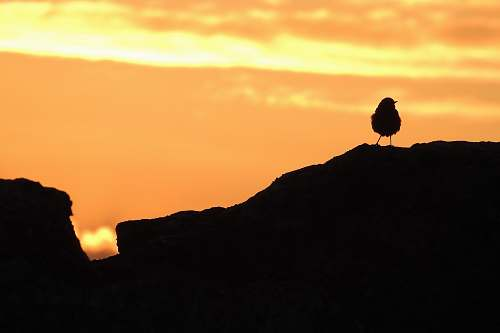 animal silhouette photography of bird during golden hour nature