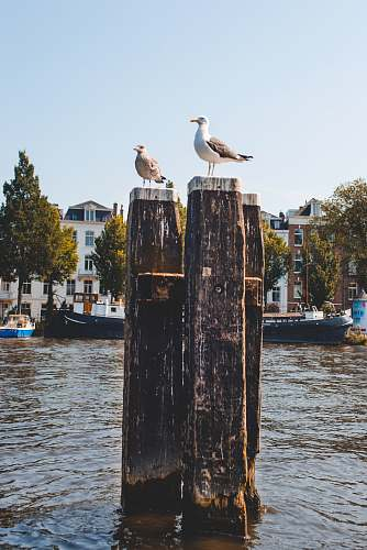 animal two birds sitting on wood posts in water transportation