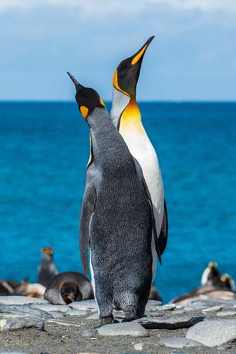 animal two penguins on seashore during daytime penguin