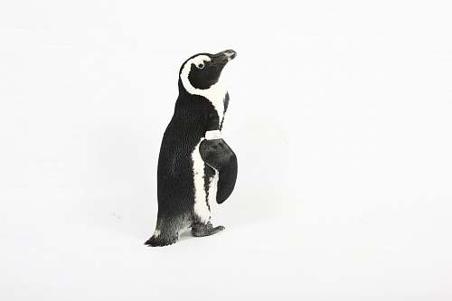 animal black penguin painting bird