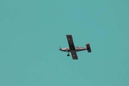 animal gray propeller plane in flight bird